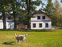 Apartmány Farma Alpaka